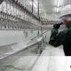Procedimientos-de-limpieza-para-industria-alimentaria
